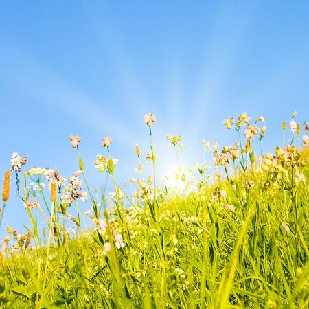 Idyllic lawn with sunlight Stock Photo - 5647931