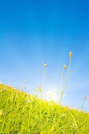 Idyllic lawn with sunlight Stock Photo - 5647903