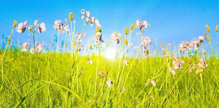 Idyllic lawn with sunlight Stock Photo