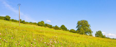 Idyllic meadow in summer photo