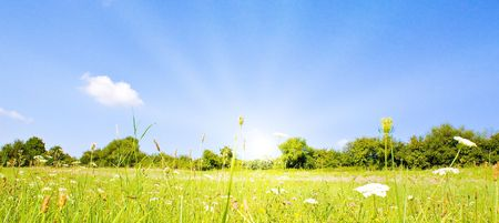 Idyllic lawn with sunlight in summer photo