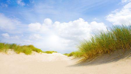 日光と牧歌的な砂丘