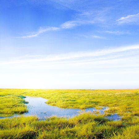 ストリームと日光の牧歌的な芝生