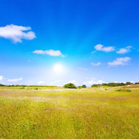 Idyllic lawn with sunlight Stock Photo - 5647922