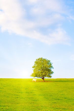 Idyllic lawn with tree in summer photo