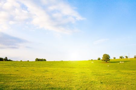 beautiful cow: Idyllic lawn with tree in summer Stock Photo
