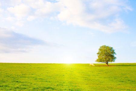 Idyllische Wiese mit Baum