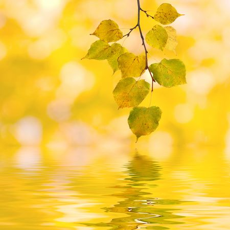 Beautiful golden leaves in autumn Stock Photo - 5866991