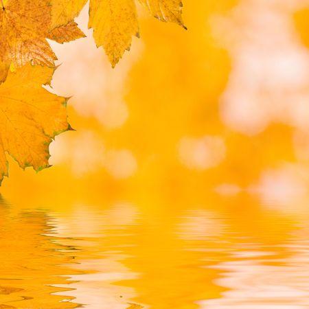 秋に美しい黄金葉