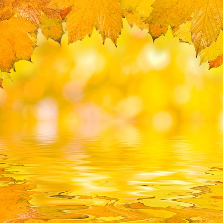Beautiful golden leaves in autumn Stock Photo - 5866985