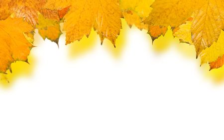 Beautiful golden leaves in autumn Stock Photo - 5866955