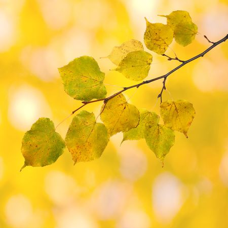 Beautiful leaves in autumn Stock Photo