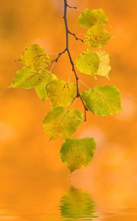 Beautiful leaves in autumn photo