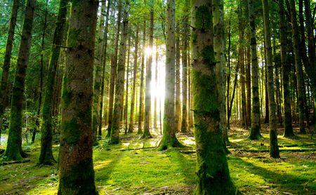 木漏れ日の森の中で美しい風景 写真素材