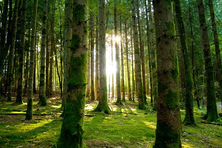 Beautiful scenery with sunbeams in the forest Stock Photo