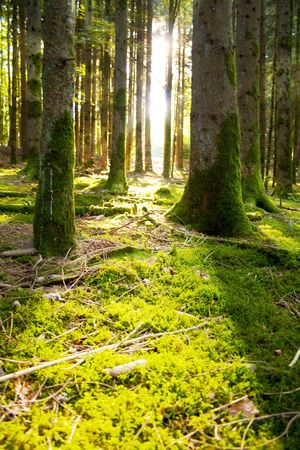 Beautiful scenery with sunbeams in the forest Stock Photo - 5914499