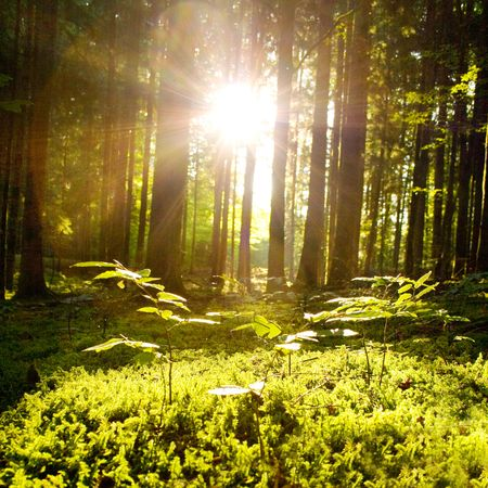 Beautiful scenery with sunbeams in the forest Фото со стока