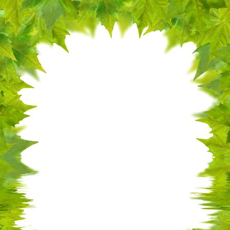 Beautiful green leaves in spring isolated on white photo