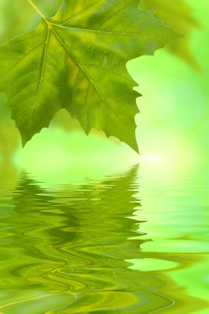 Beautiful green leaves in spring with reflection Stock Photo - 5998663