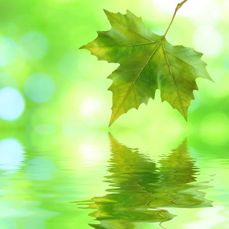 Beautiful green leaves in spring with reflection photo
