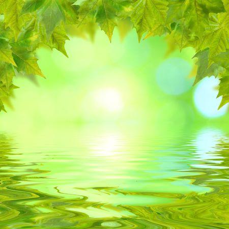 反射と春に美しい緑の葉