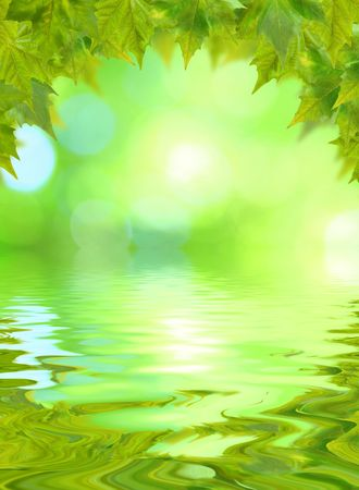 Beautiful green leaves in spring with reflection Stock Photo - 5998733