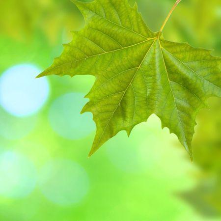 春の緑の背景の美しい緑の葉