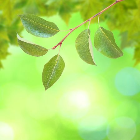 Beautiful green leaves with green background in spring Stock Photo