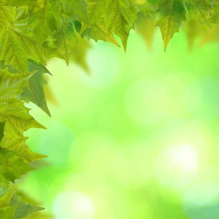 Beautiful green leaves with green background in spring photo