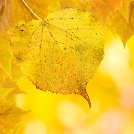 Beautiful golden leaves in autumn Stock Photo - 5998738