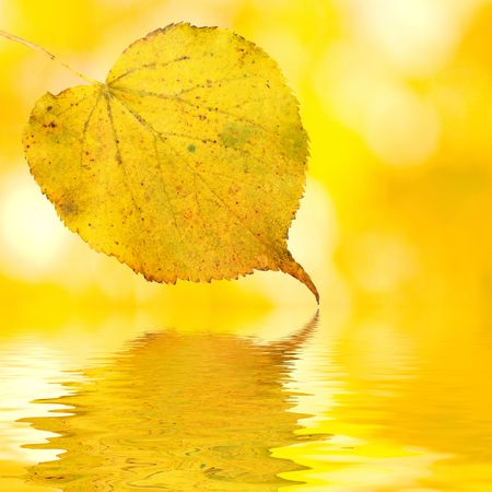 Beautiful golden leaves in autumn photo