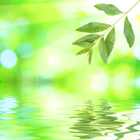 Beautiful green leaves with green background and reflection in spring