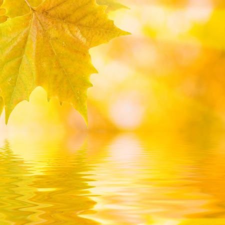 Beautiful golden leaves in autumn with reflection Stock Photo