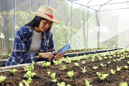 Young female farmer holds a tablet in a greenhouse. Asian woman using technology for management in organic vegetable farms.