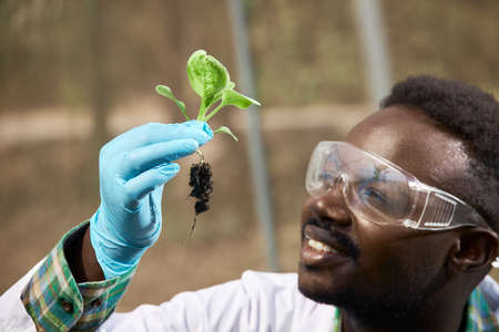 African geneticists, wearing protective glasses, are researching vegetables, scientists holding vegetables and thinking. Stock fotó