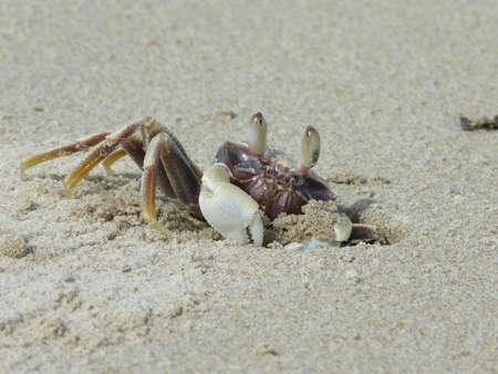 beach crab photo