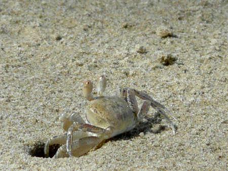 the crab 1 photo