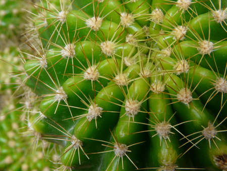 circle cactus photo