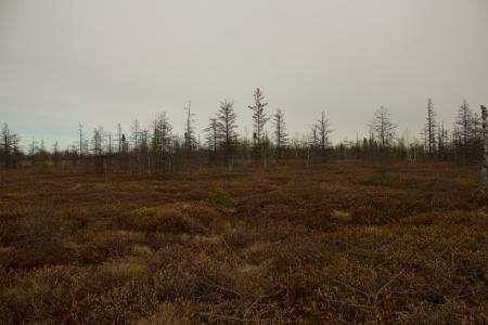 A peat moss conservation area. Reklamní fotografie