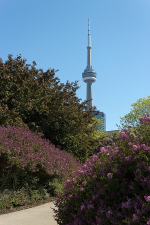 The CN Tower seen from the Harbourfront Music Garden  Stock Photo - 14147058
