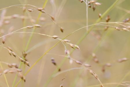 wild grass: Fondo de la hierba salvaje Foto de archivo
