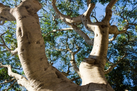 Tree branches reaching for the sky - background Stock Photo - 17012523