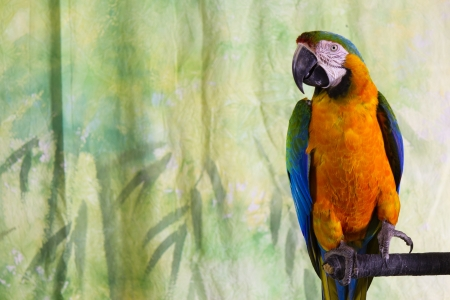 Macaw Parrot Stock Photo - 17283354