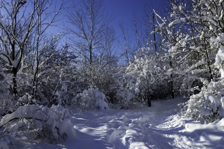winter Scene Stock Photo - 17320026