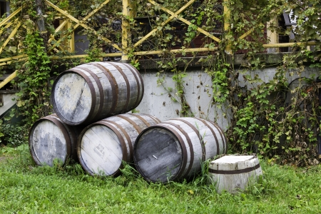 Old stacked beer barrels at the farm photo