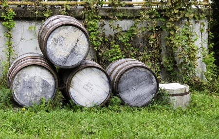 brewery: Old stacked beer barrels at the farm