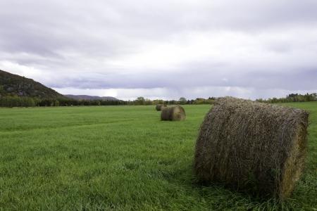 Bauernhof-Feld mit Henkeln aus Heu Lizenzfreie Bilder