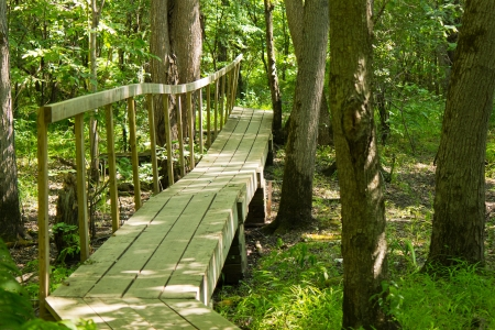 Wooden bridge on a hiking trail in the forest photo