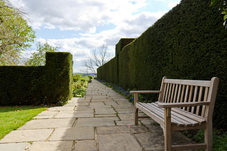 Quiet bench along a hedge in a garden Imagens