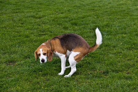 녹색 잔디에 대변을 봤 거든 개